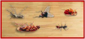Bán thuốc diệt ruồi muỗi kiến gián