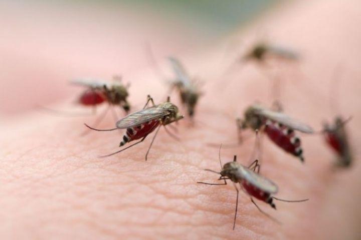 Diệt muỗi ở quận 3