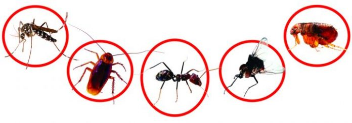Diệt côn trùng ruồi muỗi kiến gián