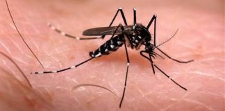 Diệt muỗi ở miền tây